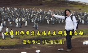女摄影师带您去福克兰群岛看企鹅
